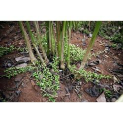 Grüne Kardamom Samen 1.95 - 3