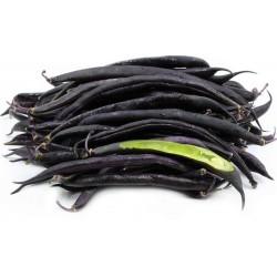 Graines Haricot Nain Mangetout Purple Queen 1.95 - 2