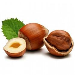 Sementes Avelã é o fruto da aveleira 1.8 - 4