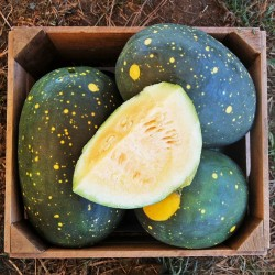 100 Seeds Yellow Fleshed Watermelon Moon and Stars 10 - 7