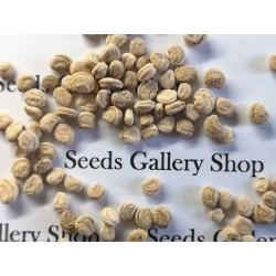 Graines Panax ginseng Plante Médicinale plant 2.5 - 6