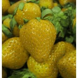 Semi di Fragola Giallo Yellow Wonder