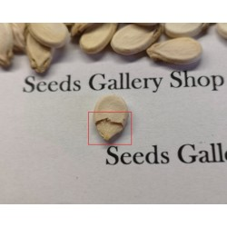 100 Seeds Yellow Fleshed Watermelon Moon and Stars 10 - 3