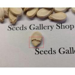 "Yellow Watermelon Seeds ""Moon and Stars"" 1.95 - 6"