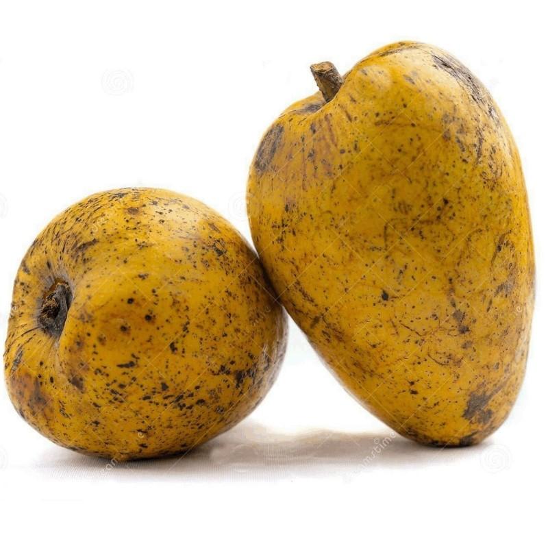 Teichapfel, Pond Apple Samen (Annona glabra) 1.85 - 5