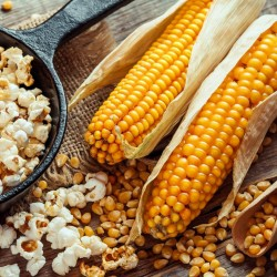 Popcorn 100 seeds - Grow your own 3 - 3