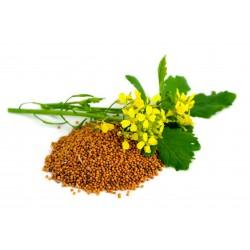 Roter Senf - Brauner Senf Samen (Brassica juncea) 1.95 - 4