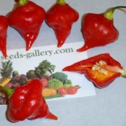 Σπόροι Τσίλι - πιπέρι Habanero Kreole (C. chinense) 2 - 2
