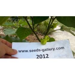 Habanero Kreole Seeds 2 - 3