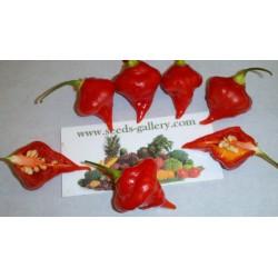 Σπόροι Τσίλι - πιπέρι Habanero Kreole (C. chinense) 2 - 9