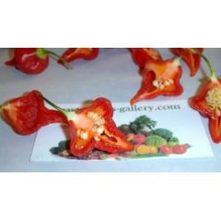 Σπόροι Τσίλι - πιπέρι Habanero Kreole (C. chinense) 2 - 12