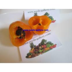 Rocoto Manzano Seeds 2.5 - 6