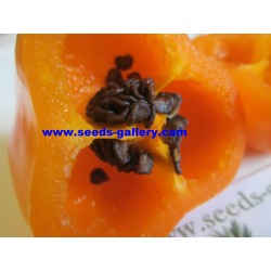 Semi di Rocoto Manzano peperoncino 2.5 - 7