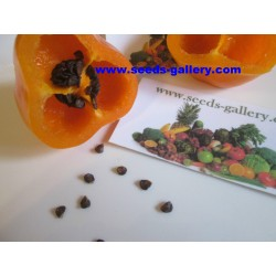 Cili Seme - Chili Inka - Rocoto Manzano 2.5 - 8
