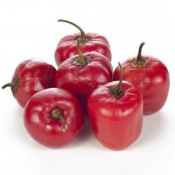 Rocoto Manzano Seeds 2.5 - 2