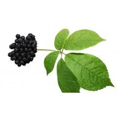 Semi di Ginseng Siberiano - eleuterococco 3 - 4