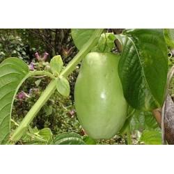 Gigant Granadilla Seme (Passiflora quadrangularis) 2.5 - 5