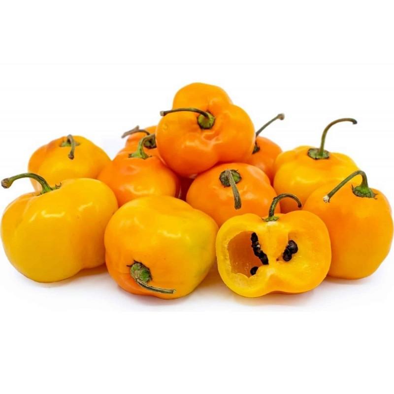 Semi di Rocoto Manzano peperoncino