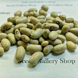 Семена зеленой фасоли СЛАВОНСКИЕ ЗЕЛЕНЫ 1.35 - 1