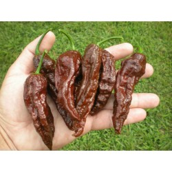 Semi Di Bhut Jolokia Peperoncino Piccante
