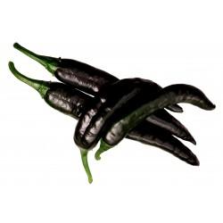 Μαύρο τσίλι Pasilla Bajio σπόροι 1.95 - 6