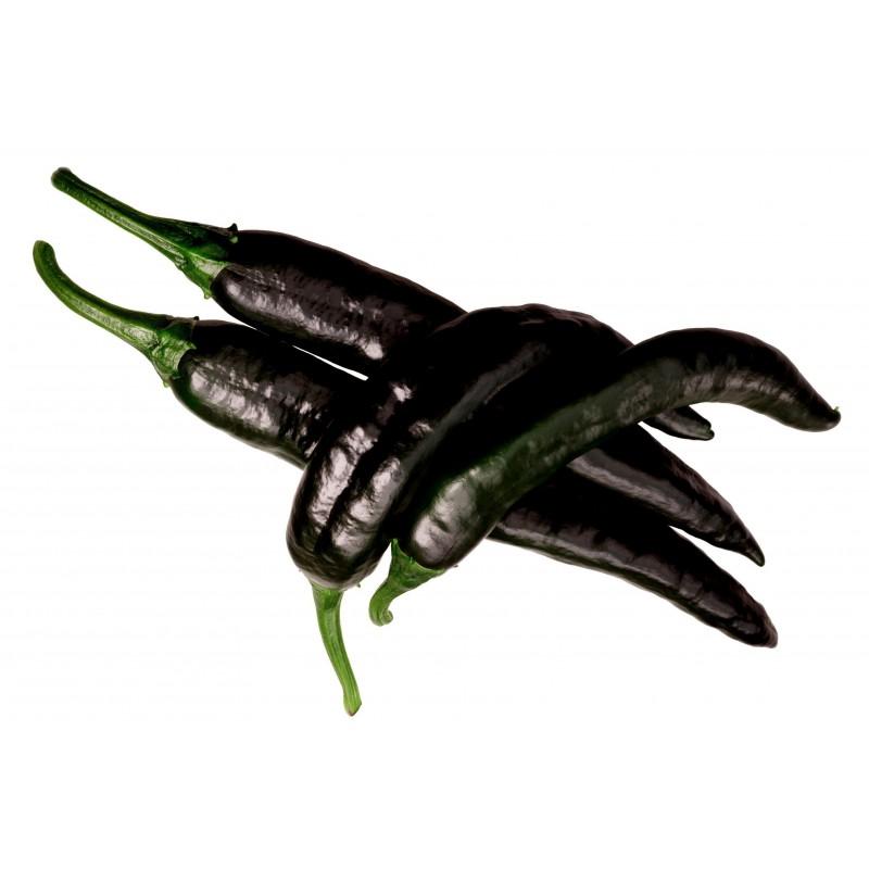 Schwarze Chili Samen 'Pasilla Bajio' 1.95 - 6