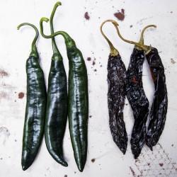 Sementes Da Pimenta Pasilla Bajio Ou Chile Negro 1.95 - 4