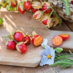 Litchi Tomato Seeds (Solanum sisymbriifolium) 1.8 - 1