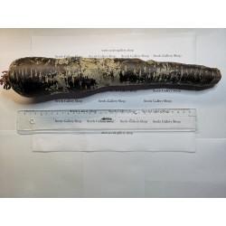 Semillas de zanahoria gigante Purple Dragon 1.55 - 5