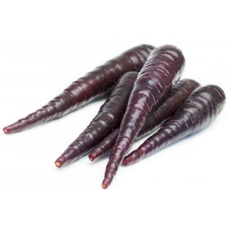 Giant Carrot Seeds Purple Dragon 1.55 - 8