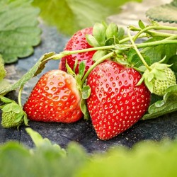 Red Strawberry Seeds 1.95 - 1