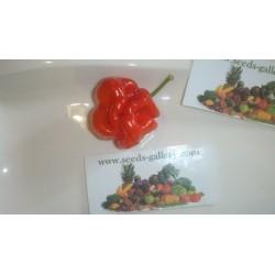 Habanero Senegal Seeds