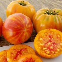 BIG RAINBOW Ντομάτα βιολογικός σπόρος 2.5 - 4