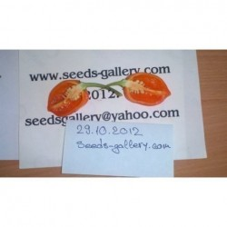 Habanero Savina Red Seeds