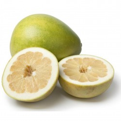 Citrus Grandis Pomelo Seeds (Citrus maxima) 1.95 - 4
