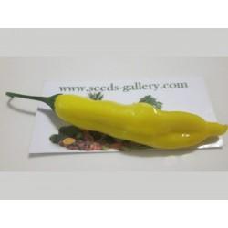 Lemon Drop Chili Seme (Capsicum baccatum) 1.5 - 5