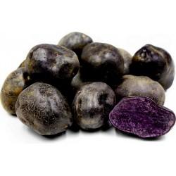 Sementes De Batatas Roxa Peruanas 3.05 - 6