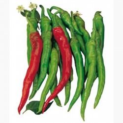 SIGARETTA Sweet Chili Seed (C. annuum) 1.45 - 3