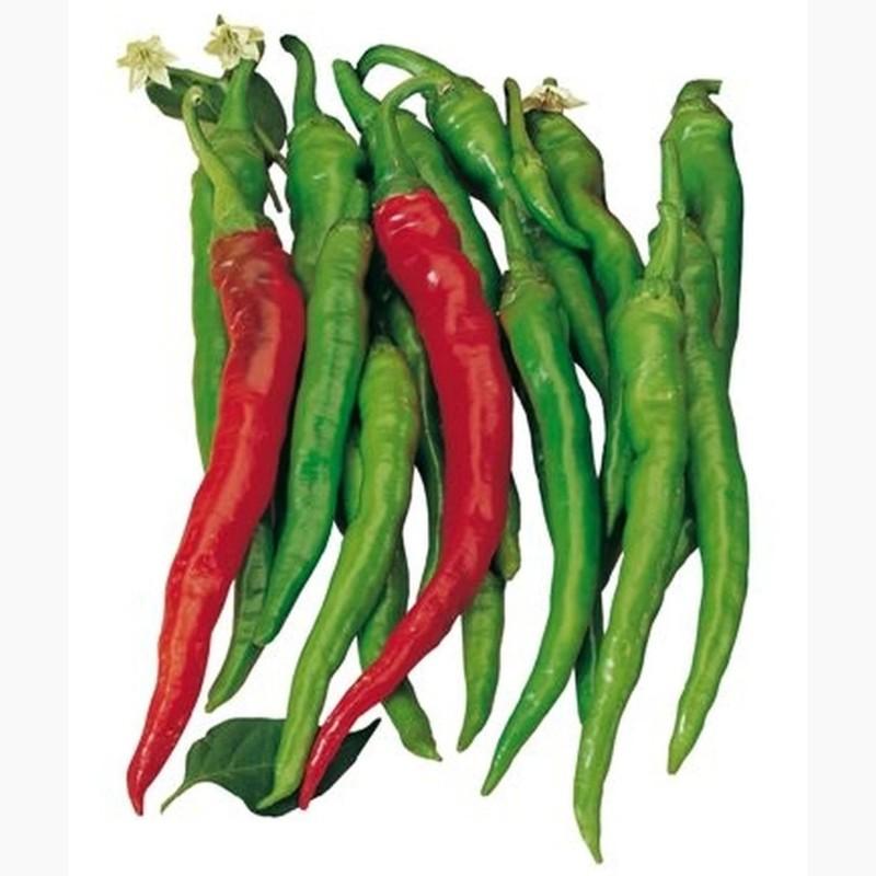 SIGARETTA Slatki Chili Cili Seme (C. annuum) 1.45 - 3