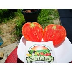 """Sementes de Tomato """"Coração de Boi"""" 1.75 - 3"""