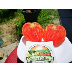 Tomatensamen Ochsenherz BIO 1.75 - 3