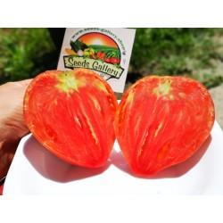 Tomato Seeds Oxheart - Bull's Heart 1.75 - 4