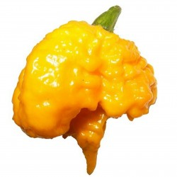 Carolina Reaper Seeds Red or Yellow Worlds Hottest 2.45 - 8