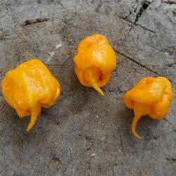 Sementes da Pimenta Carolina Reaper vermelho e amarelo 2.45 - 9