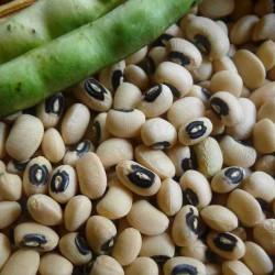 Augenbohne Samen (Vigna unguiculata) 2.5 - 2