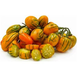 STRIPED TOGA Eggplant Seeds Heirloom Aubergine 2.25 - 4