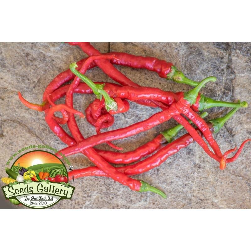Sweet Chili Seeds PITON - PYTHON 1.65 - 4