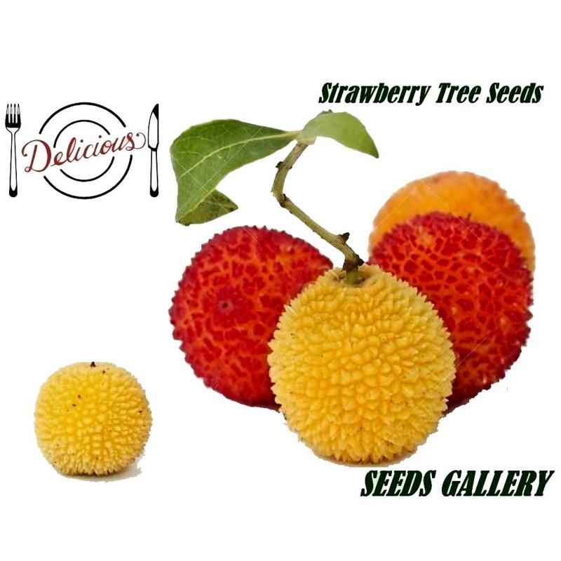 Erdbeerbaum Samen Das Unikum (Arbutus Unedo) 1.75 - 1