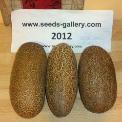 Graines de Concombre Poona Kheera 2.35 - 2
