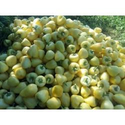 Semi di Peperoncino Piccante Somborka 1.85 - 8